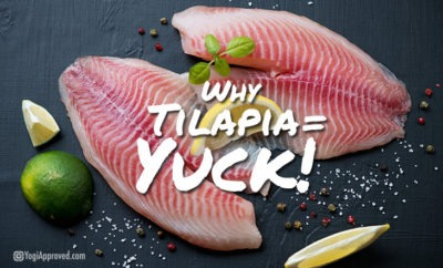 the-truth-about-tilapia