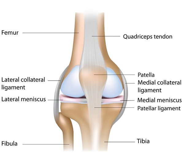 knee-joint-anterior