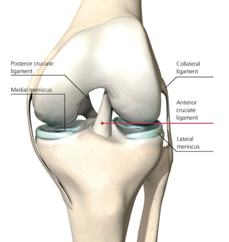 How to Avoid Knee Injuries pics