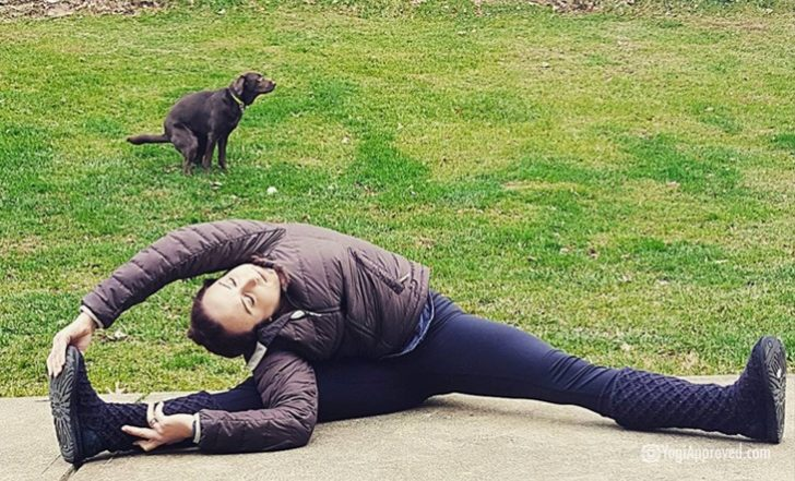 10 Hilarious Pet Yoga Photobombs on Instagram