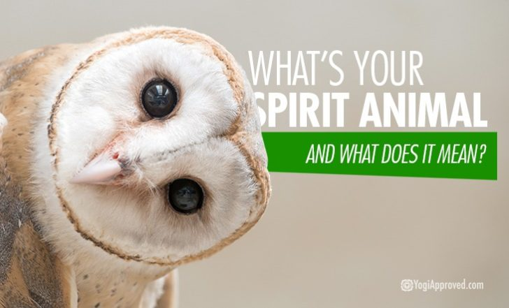 Owls, Hawks and Butterflies – Oh My! Here Are 8 Common Spirit Animals and Their Symbolism