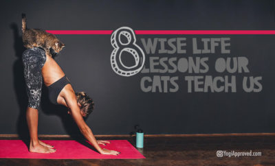 wise life lessons cats featured