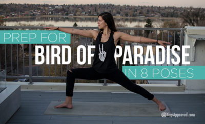 bird of paradise prep featured
