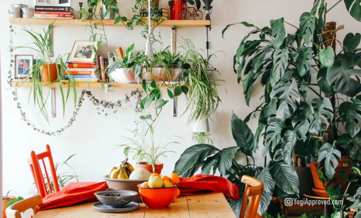 Decorate With These Air Purifying Plants to Naturally Purify Your Home