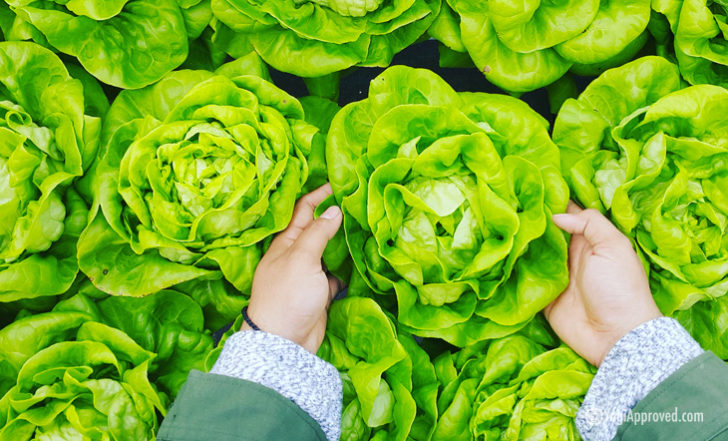 How Healthy Are Your Favorite Leafy Greens? (We Break It Down)
