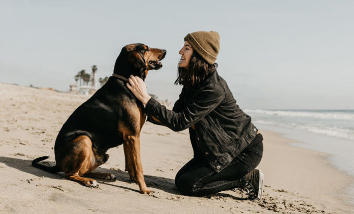 5 Important Health Benefits of Giving Your Pet CBD